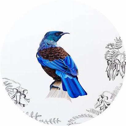 Bird Tui Nz Native Prints Fine Wholesale