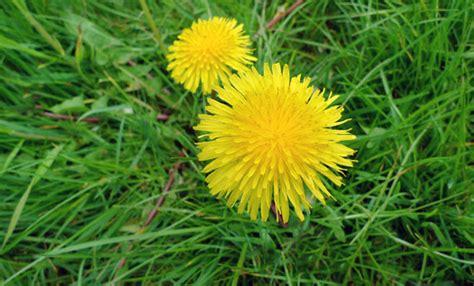 Come eliminare le erbe infestanti in 3 mosse LEITV