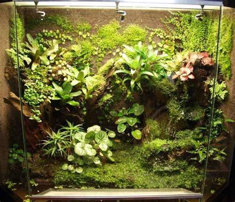 nice plant wall reptile terrarium frog terrarium vivarium