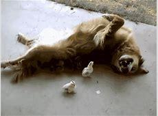 Zdjęcia i animowane gify z Śmieszne Psy ~ Gifmania