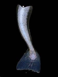 Mermaid Tail Art