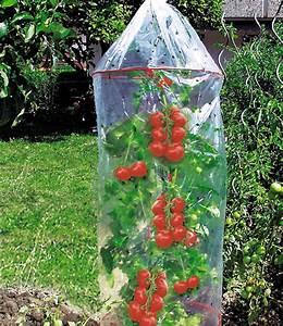 Tomaten Regenschutz Selber Bauen : tomaten reifehaube pflanzenvlies folie bei baldur garten ~ Frokenaadalensverden.com Haus und Dekorationen