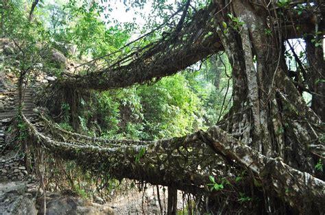 Road Less Travelled Double Decker Root Bridge A Living