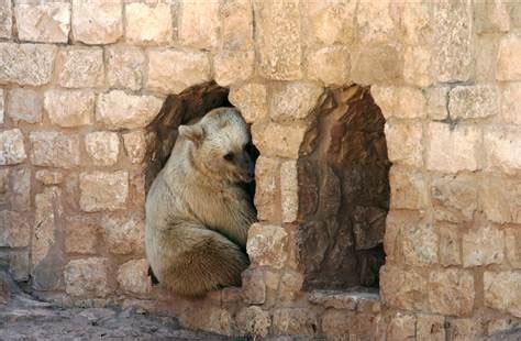 stressed zoo animals