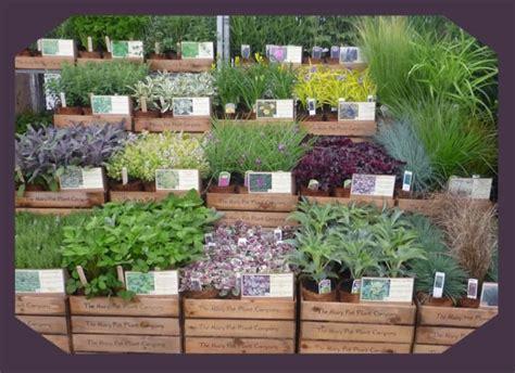 the 25 best garden center displays ideas on