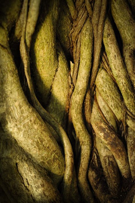 colored roots roots lovely color texture green