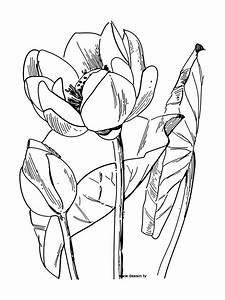 Dessin Fleurs De Lotus : fleurs lotus dessin ~ Dode.kayakingforconservation.com Idées de Décoration
