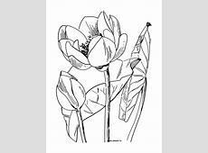 Dessin Cerisier Japonais Noir Et Blanc Cheap Top Des Des Tatouages