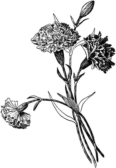 Tissue paper carnations | ClipArt ETC