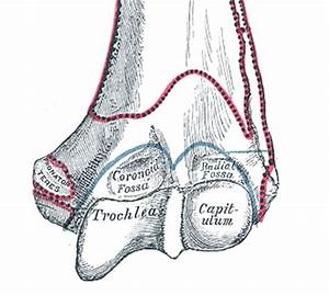 Trochlea of humerus - Wikipedia