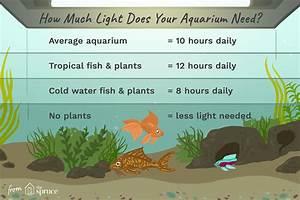 Optimale Aquarium Temperatur : adjust aquarium lighting to support plants and fish ~ Yasmunasinghe.com Haus und Dekorationen