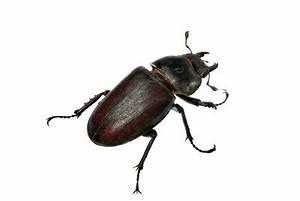 Kleine Schwarze Käfer Im Keller : schwarze k fer in der wohnung so werden sie die insekten ~ Lizthompson.info Haus und Dekorationen