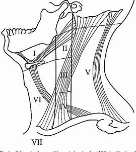 Figure 1 From Sonography Of Neck Lymph Nodes  Part Ii