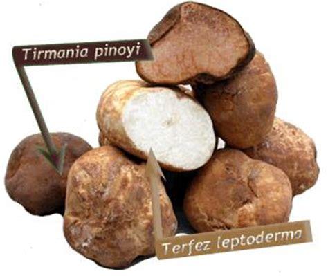 comment cuisiner les truffes noires truffes truffe du périgord truffe de bourgogne