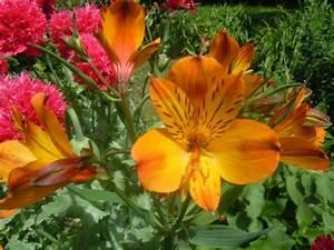 Rever De Jardin : des fleurs de mon jardin pour vous faire un peu rever blog de tamara312 ~ Carolinahurricanesstore.com Idées de Décoration