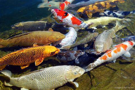 koi pond filters work