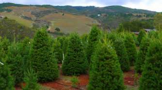 Outdoors Christmas Trees