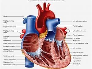 The Hidden Agenda Of Heart