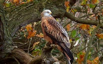 Tree Eagle Birds Trees Wallpapers Bird Autumn