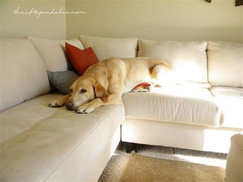 how to remove dog hair from sofa 1000 images about handy hints on pinterest cleanses