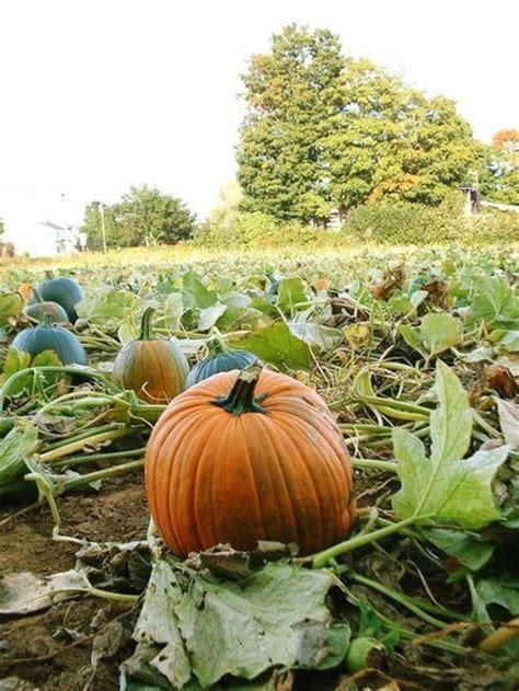 chambre agriculture loir et cher pai du loir et cher devenir agriculteur en région centre