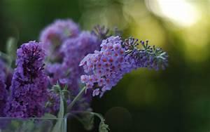 Purple, Flower, Hd, Wallpapers