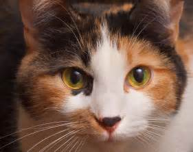 cat faces cat face 2001web
