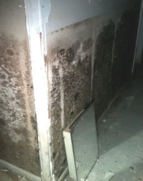 Basement Mold Remediation Removal, Prevention Tips. Online Living Room Furniture. Living Room Ministries. Living Room Desk. Finance Living Room Furniture. Living Room Layouts With Tv. Ceiling Designs For Small Living Room. Green And Grey Living Room. Video Chat Rooms Live