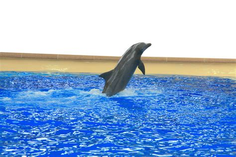 Be A Dolphin Trainer  Kayce Cover  Syn Alia Training. Whiteboard Animation Companies. Replacement Windows Vs New Windows. Medicare Supplemental Drug Plans. Plumber Fountain Valley Delta Sky Credit Card. Cheap Locksmith In Atlanta Ga. Best Cable Internet Deals Carver Pump Company. Safety Cabinet For Flammables. New Lisbon Telephone Company Dealers In Ct