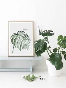 Grande Plante D Intérieur Facile D Entretien : 5 plantes d 39 int rieur faciles d 39 entretien lili in wonderland ~ Premium-room.com Idées de Décoration