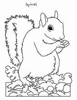 Coloring Squirrel Clipart Pages Clipground sketch template
