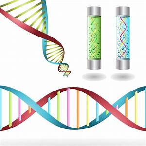 DNA Strains Vector   Free Vector Graphics
