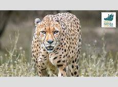 Giornata internazionale del ghepardo Carnet Verona