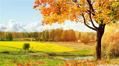 Beautiful Autumn Trees Wallpapers by A Beautiful View Of Colorful Autumn Trees