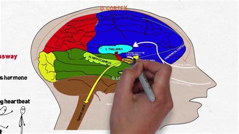 brain  stress  anxiety youtube