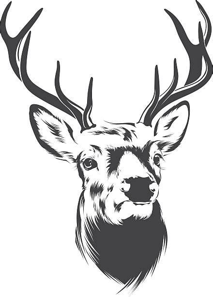 Royalty Free Stag Clip Art Vector Images Illustrations