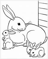 Coloring Rabbit Pages Print Children sketch template