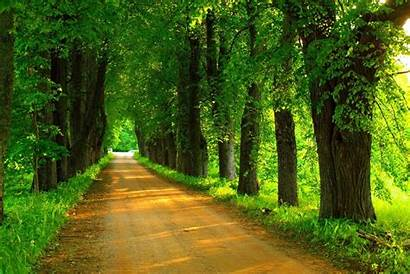 Road Trees Tree Path Forest Nature Spring