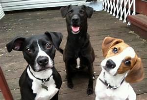 Tricks to Teach Your Dog: 14 Impressive Training Options