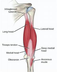 Biceps And Triceps Tendon Rupture  U2013 Core Em