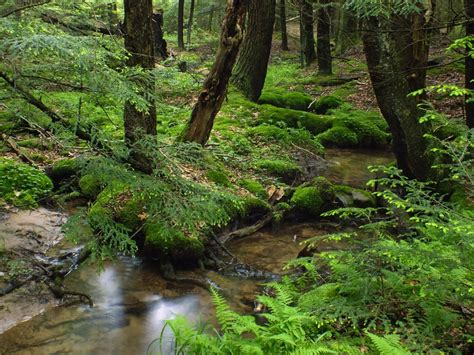 picture wood nature water forest landscape moss