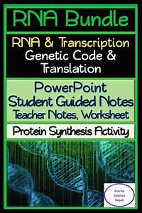 Rna Bundle  Rna  U0026 Transcription  Genetic Code  U0026 Protein