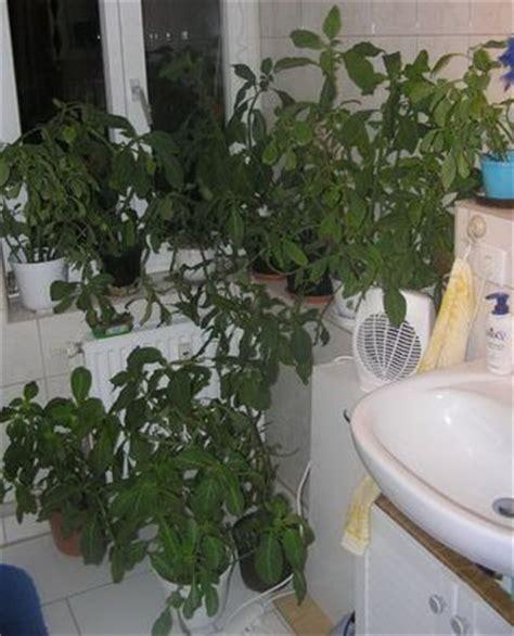 des plantes dans votre salle de bains le pouvoir des fleurs