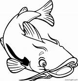 Catfish Coloringall Drukowanka Kolorowanka sketch template