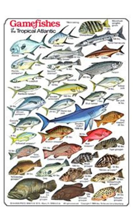 hawaiian fish id chart game fish   tropical