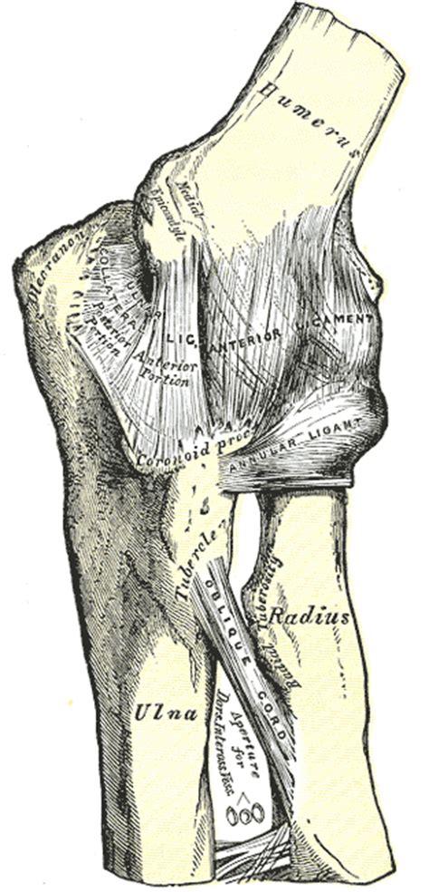 medial epicondylitis pitchers golfers elbow symptoms