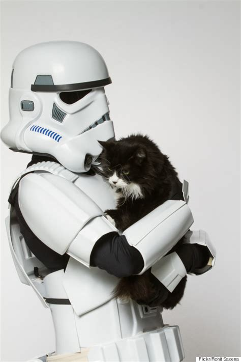 star wars villains  shelter animals