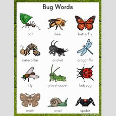 Writing Center Word List  Bug Words  Bugs In The Garden  Writing Topics, Writing, Bugs