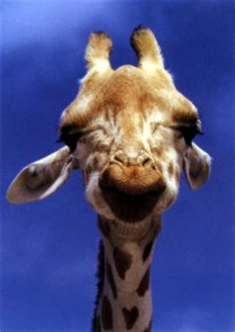 La Giraffa Vanitosa Una Fiaba Africana La Giraffa Vanitosa Tutto Mamma
