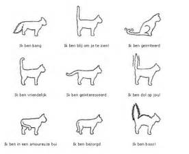 sign someone up for cat facts lichaamstaal katten kattenplaza